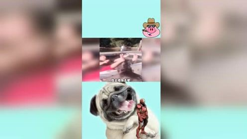 爆笑合集:动物们的搞笑片段