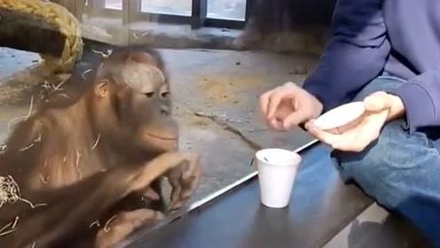表哥给动物园的猩猩表演魔术,场面真的太搞笑