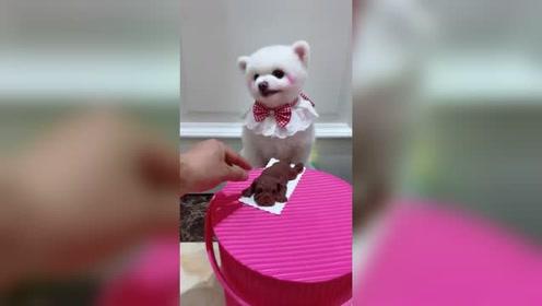 狗狗是有感情的,看完这个视频我被感动啦