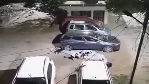若不是视频为证,谁能想象狗子会偷车衣,这狗子成精了