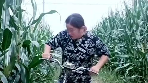 美女骑电动车偷玉米,被主人直接抓包,解决办法让人哭笑不得