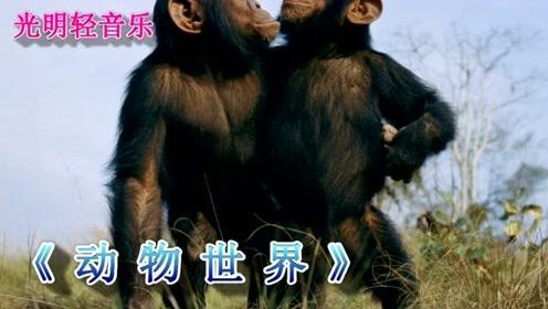 抖音小视频非常火的《动物世界》轻音乐,终于找到DVD版本了
