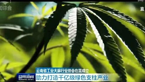 云南省工业大麻行业协会在昆成立 助力打造千亿级绿色支柱产业