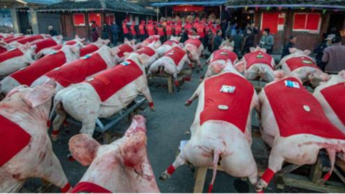 美国人基本不吃猪肉,为啥能成为全球养猪大国?看完你会想吃吗?