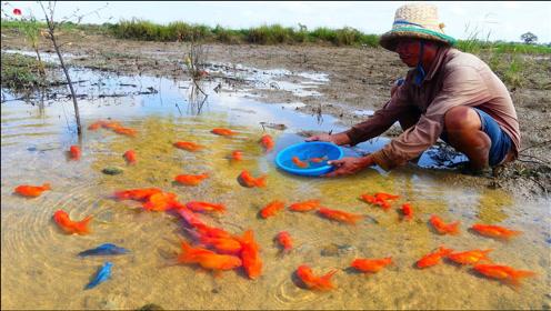 大叔野外游玩,捕获一堆金鱼,这下发财了