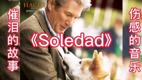 一首熟悉又伤感的音乐《Soledad》,配上催泪的故事,眼泪止不住的流