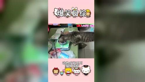 搞笑日综:建国之后动物不都禁止成精了?这些
