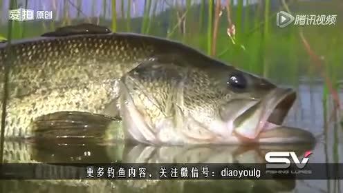 看完这个中鱼视频 颠覆你对钓鱼的理解