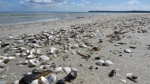 为什么去泰国旅游,不能捡拾沙滩上的贝壳?一旦捡了这辈子就完了