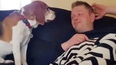 主人困了想休息,狗狗却缠着主人不依不饶吧!