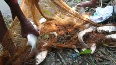 农村大叔撒网捕鱼,技术强悍一次收获十几斤