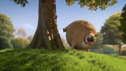 如果动物都变成圆形的会怎么样呢?仓鼠和猫咪