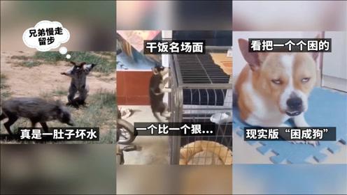 搞笑动物:动物干饭现场,一个比一个狠