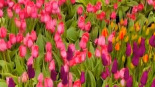 北陵公园第五届花朝节今日启动,快来赏花游玩