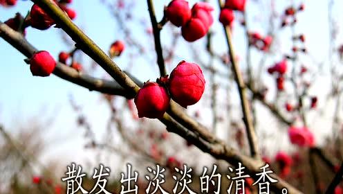 苏教版一年级语文下册4.春到梅花山