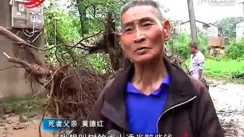 大树倒下砸死人 树主人称是天灾与自己无关