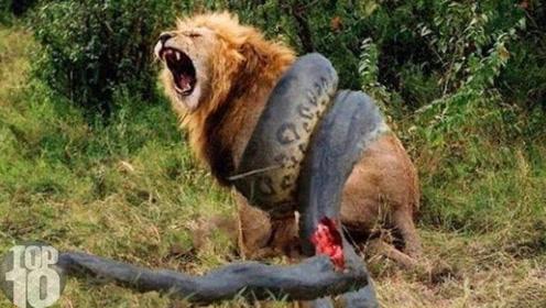 10大镜头记录下的野生动物单挑大战