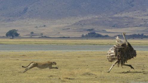 对人类有救命之恩的动物,出现的时间比恐龙早,如今因