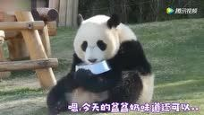 熊猫宝宝:奶奶快赔我盆盆奶,都被你吓翻了!