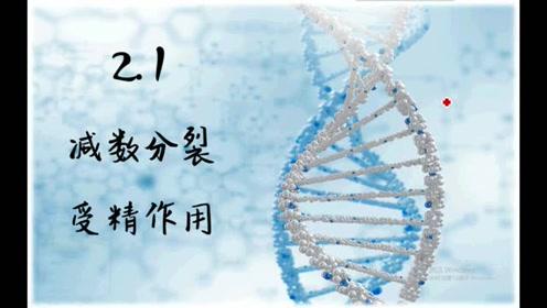 高中生物必修二《遺傳與進化》2.1 減數分裂和受精作用