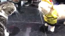 两只喵星人在商场偶遇,看样子在暗送秋波呢