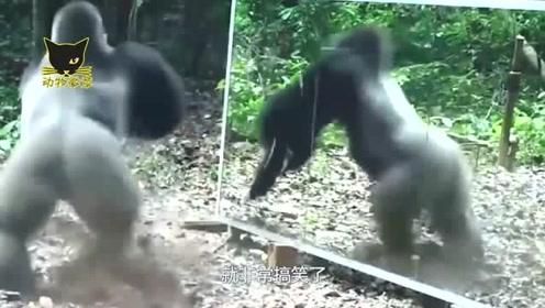 盘点:各种动物照镜子时的反应,其中猩猩的最