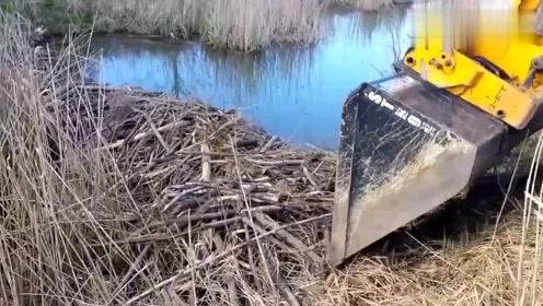 实拍挖掘机挖开堵住河水的楛柴,挖开那一瞬间