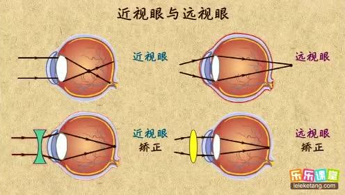 八年級物理上冊第五章 透鏡及其應用2 生活中的透鏡