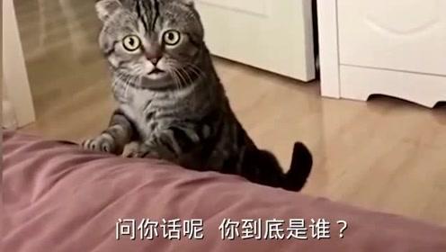 搞笑视频,女主人起床没化妆!猫咪惊讶质问,说,你到底是谁?笑死我了