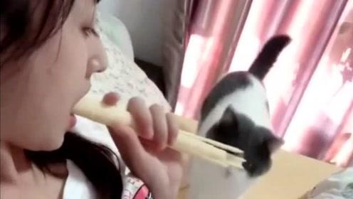 活得还不如猫,美女这么做对单身狗也太不友好了,我居然嫉妒一只猫!