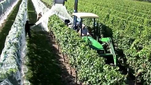 别怪我没见识,看完视频我直接就惊呆了,这农机设备真是太厉害了!