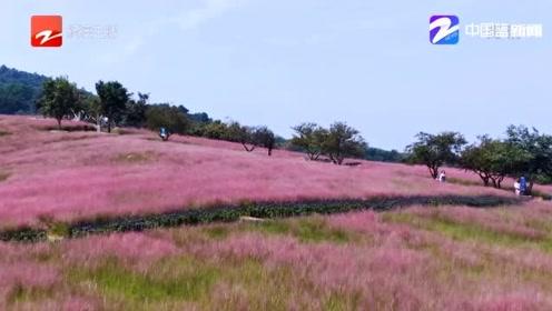 漫山遍野的粉红色,如果你有外出旅游的打算,应该来这里看一看