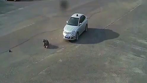 车祸集锦:用特效都做不出来, 视频车就是活生生的例子,引以为戒啊!