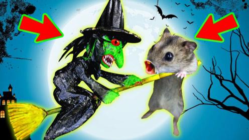 仓鼠勇闯万圣节暗黑迷宫,半路被绿女巫绑走,它能成功逃脱吗?