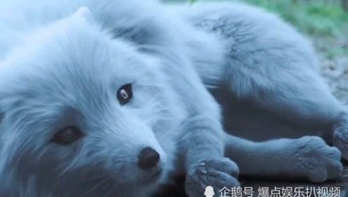 赤狐书生:动物的感性在某些时候,真的超越人性!