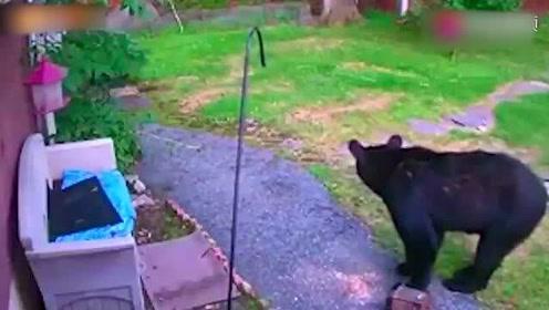 一黑熊被老虎盯上,为了避开它躲到了树上,结果欲哭无泪