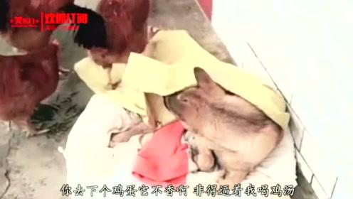 搞笑视频:动物都快成精了 我家鸡一看就是只有文化的鸡