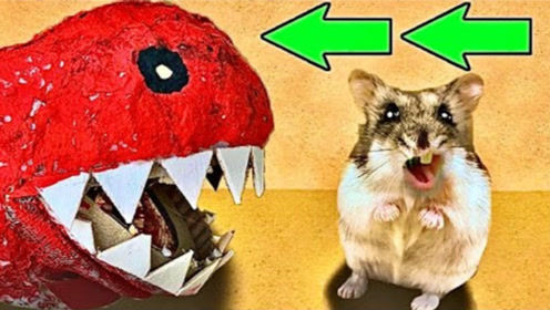 仓鼠迷宫遇上大嘴怪,它能成功逃脱吗?全程刺激又搞笑!