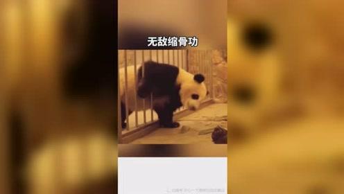 动物越狱搞笑瞬间......