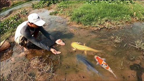小伙河边游玩,捕获一堆锦鲤,真让人羡慕