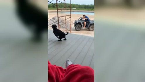 搞笑的狗狗,看一遍笑一遍#国外 #恶搞