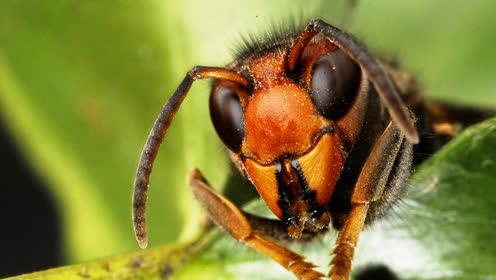 五分快三稳赢法_世界上最毒的十大昆虫,夺人性命只需几秒钟(emagine-group.com)