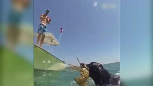 别人家的汪星人都会下海抓大龙虾了,我家的那