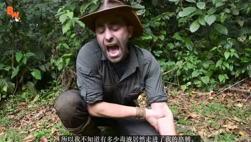 疼痛程度排名第一的子弹蚁 叮咬一口会怎样 外国