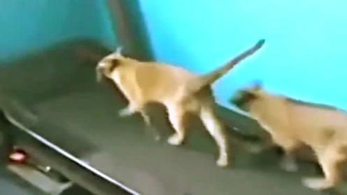 超搞笑!动物搞笑瞬间视频集锦,让你一次笑个