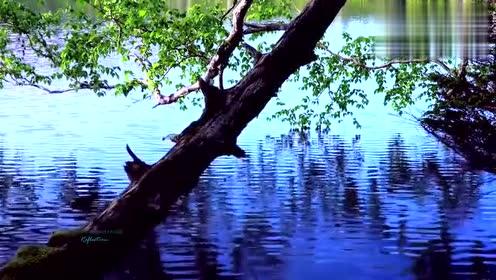 潺潺的流水,多彩的森林伴随着优美的轻音乐