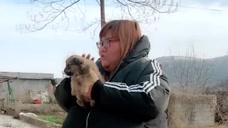 胖圆圆:胖圆圆真是可爱,看到一只狗,就高兴地不得了