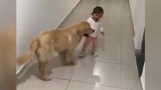 狗狗看到小主人,立马跑上前去,还表现出亲昵的样子!