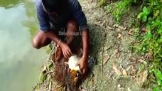 农村大叔池塘撒网捕鱼,捕到了一大鱼,鱼太肥了,能不能吃?