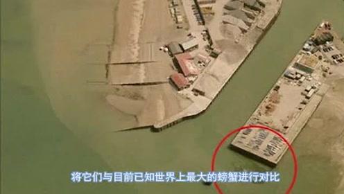 英國現15米巨型殺人蟹,潛伏岸邊襲擊幼兒,來歷令人不寒而栗